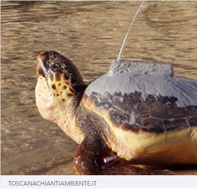 Droni, app e trasmettitori satellitari per salvare le tartarughe marine