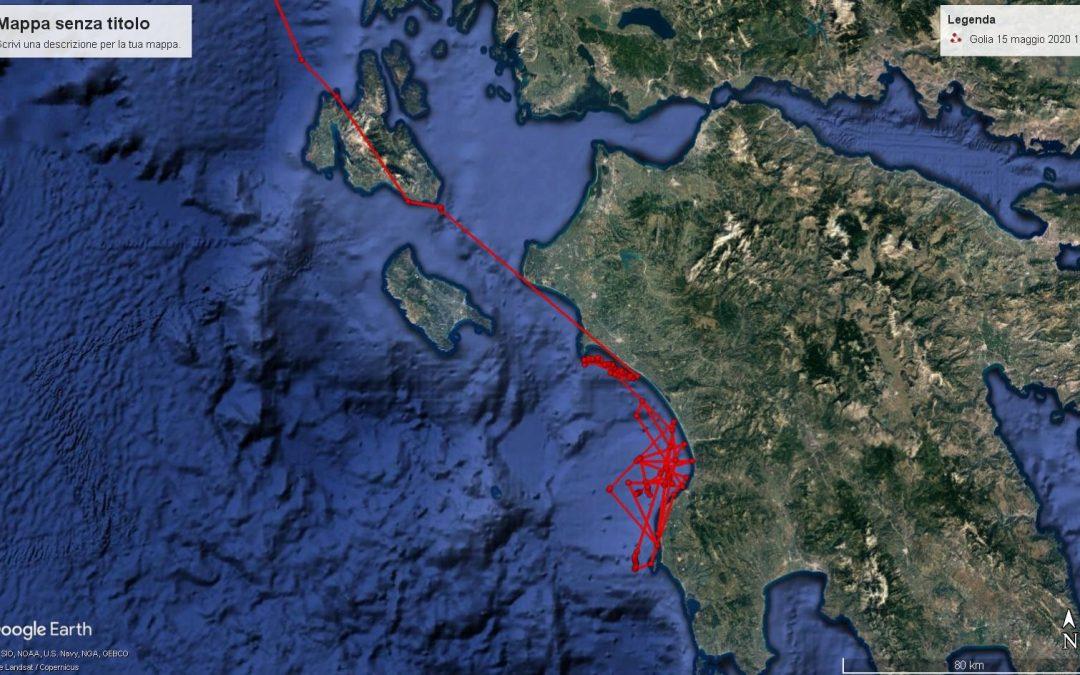 News from the male loggerhead sea turtle Golia