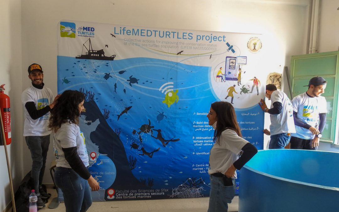 Implementation of a first aid center for sea turtles in Sfax