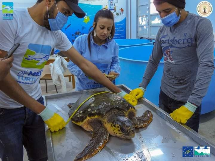 The Second turtle arrived at Sfax first aid center!