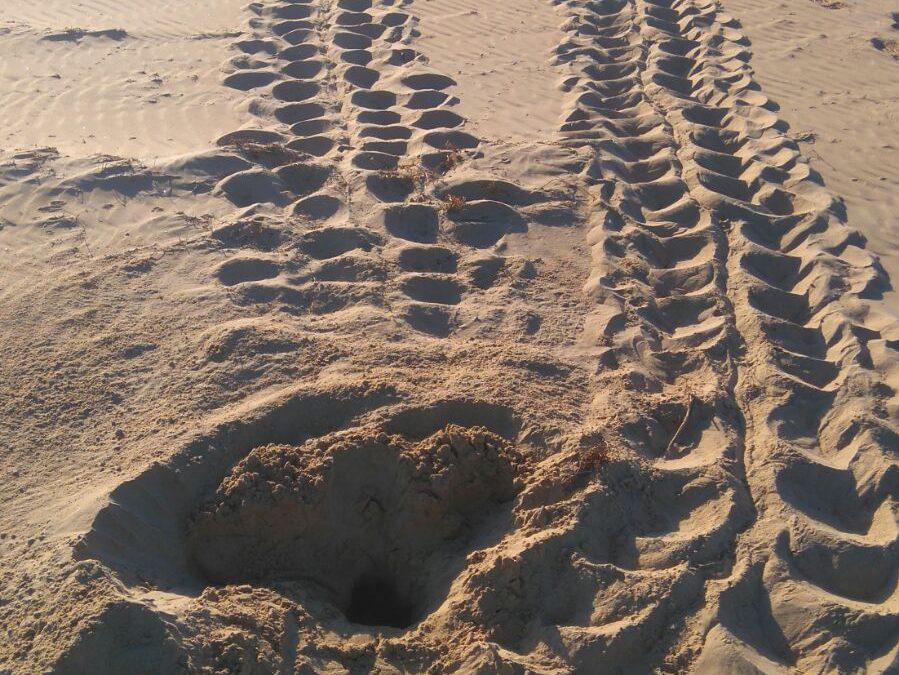 Beginning of sea turtle's nesting season 2021