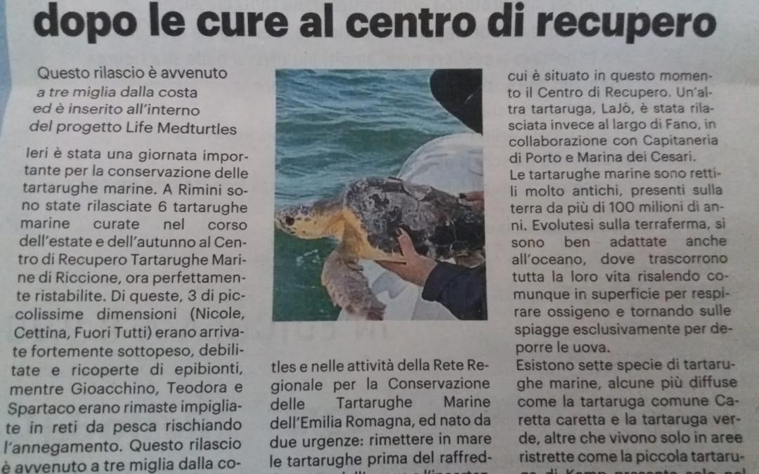 Fondazione Cetacea's rescue center relesed 6 sea turtles