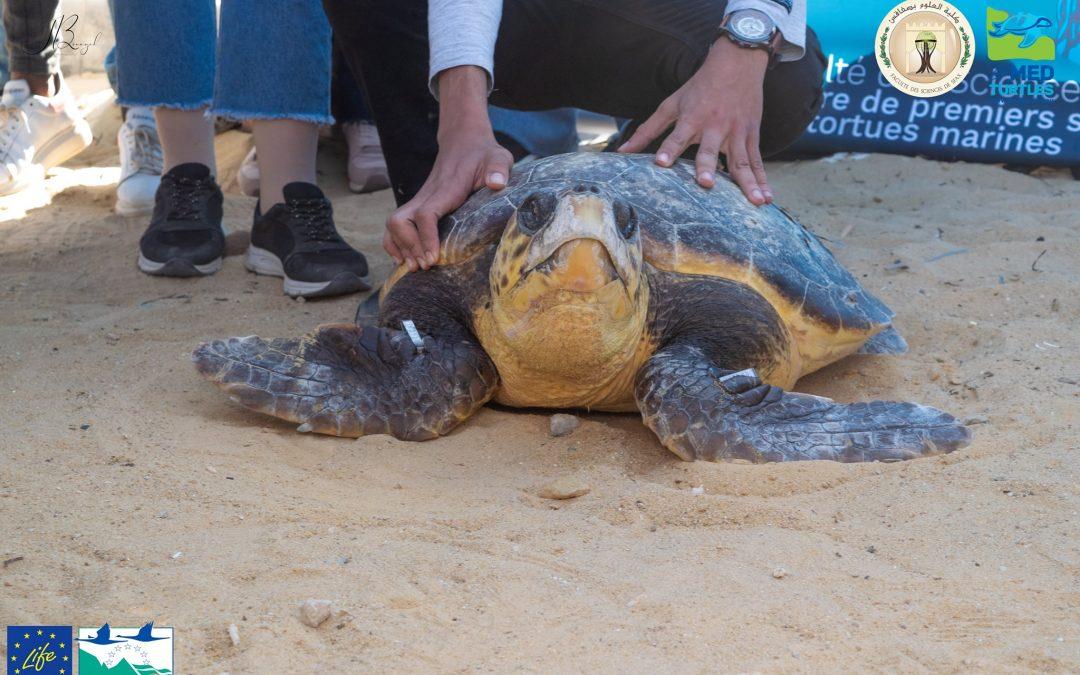 "The sea turtle ""Sayda"" was released in Tunisia!"