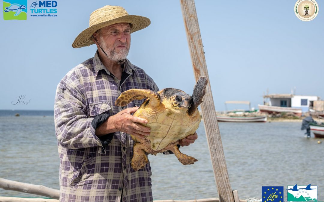 Another loggerhead turtle arrives at the first aid center from Sfax!