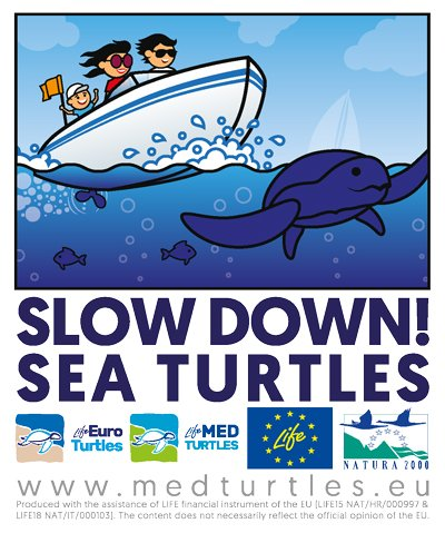 SLOW DOWN, SEA TURTLES